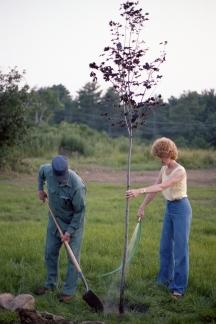 1980 tree003