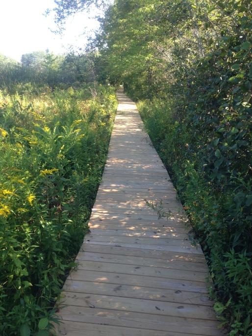 path to beach cape elizabeth