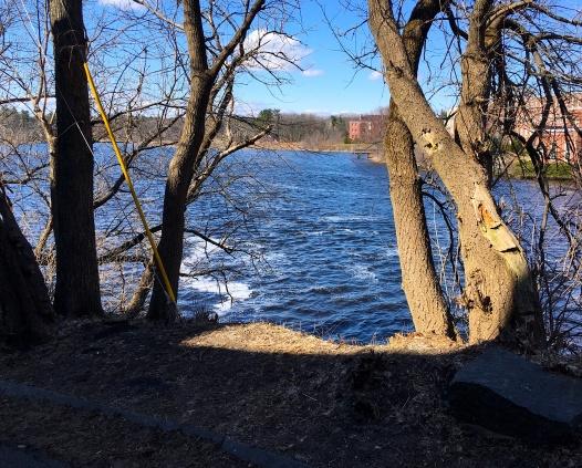 sunshine river