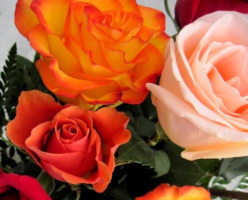birthday roses close up