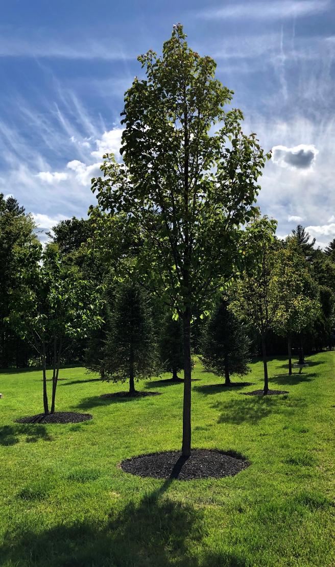 tree 2 copy
