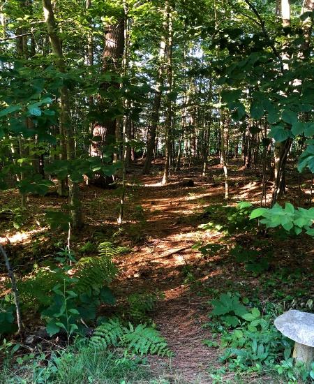 woods presence