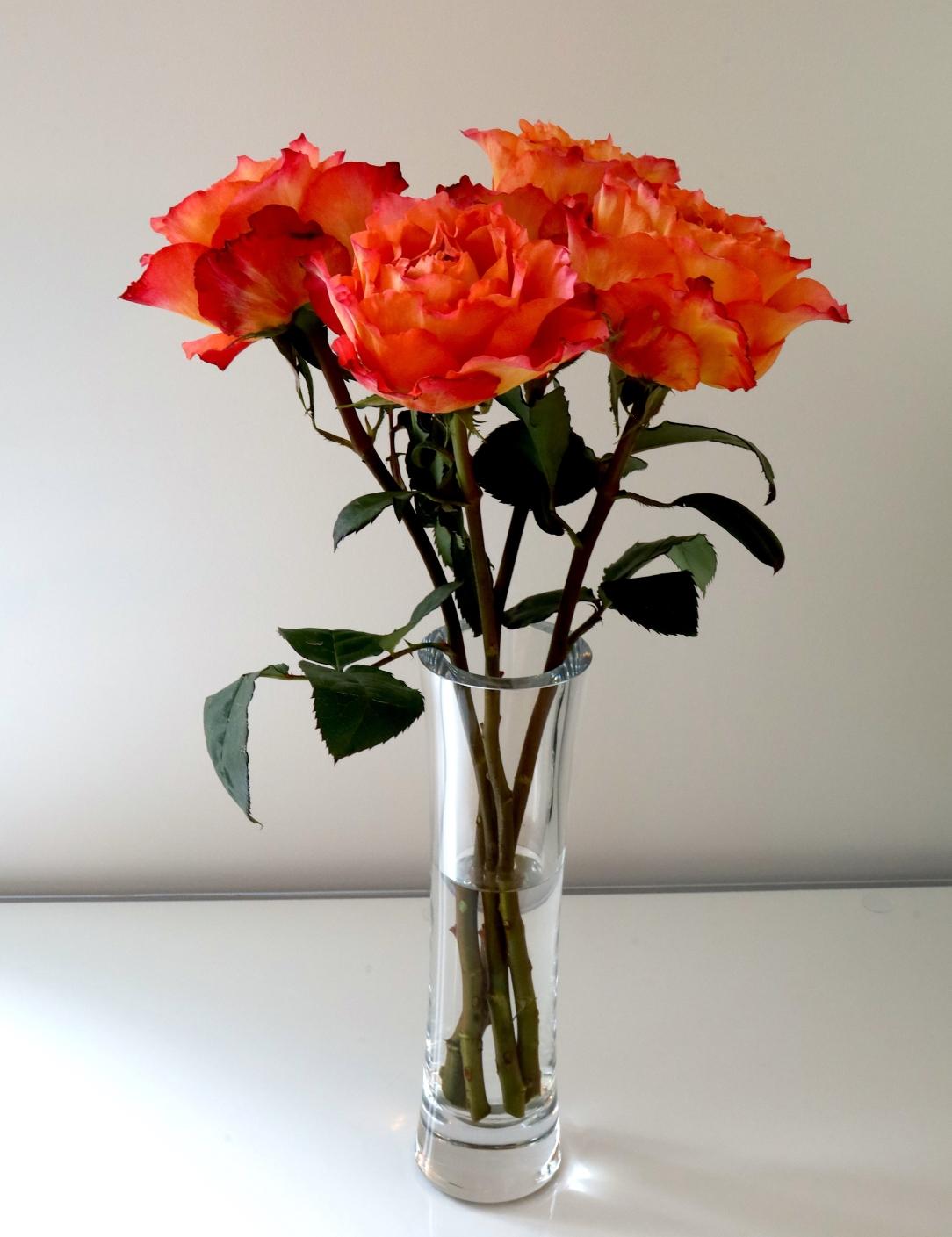 anniversary-roses.jpg
