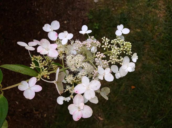 white bush