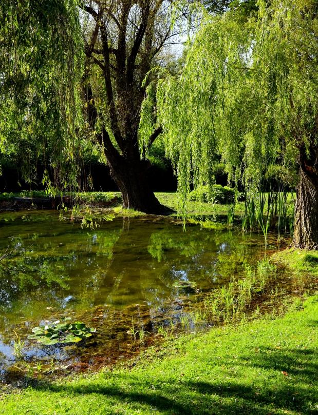 magical pond