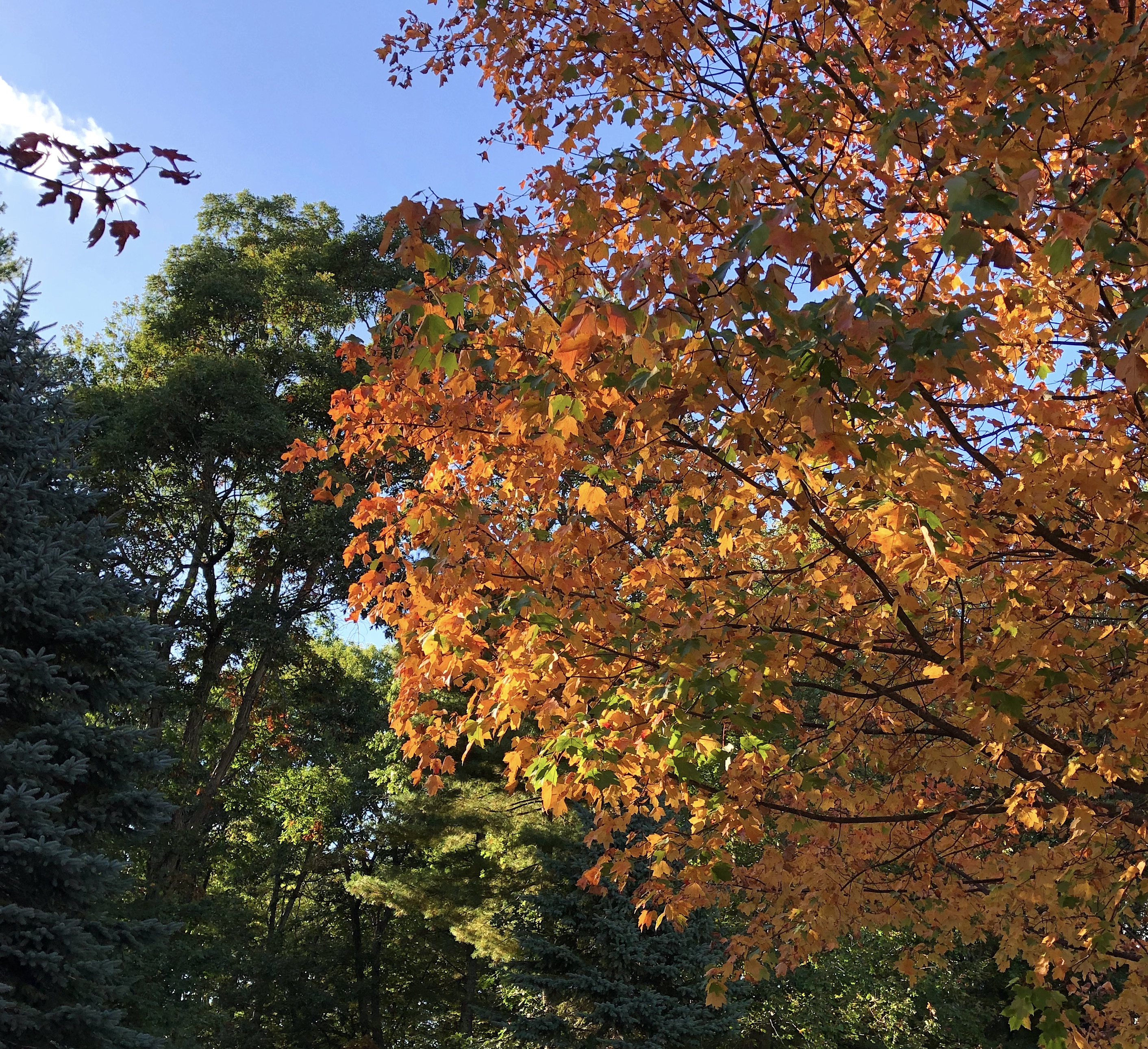 natural fall