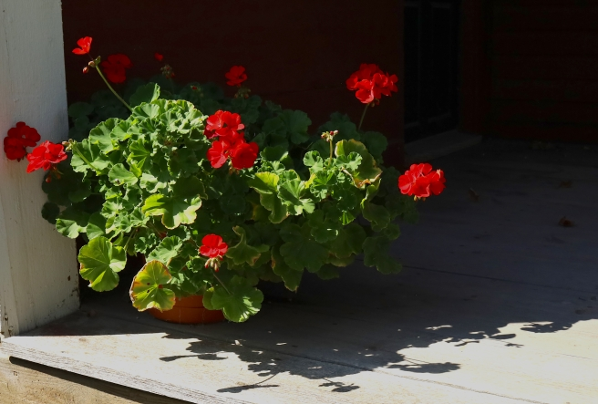 red flowers on porch