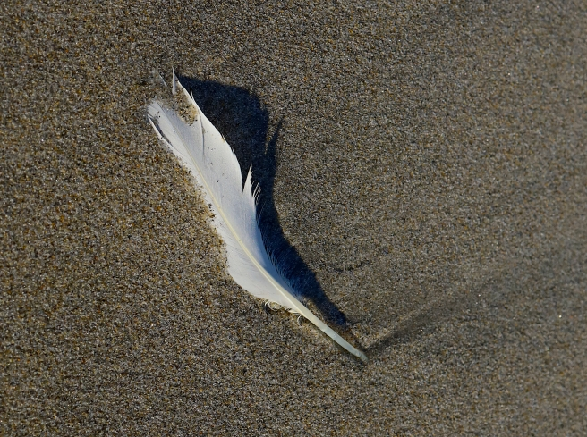 sand feather