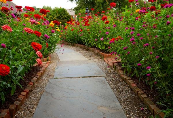 zinnia path