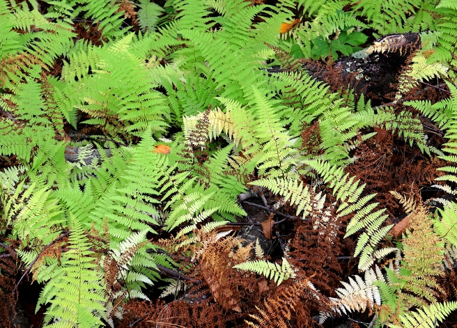 ferns two