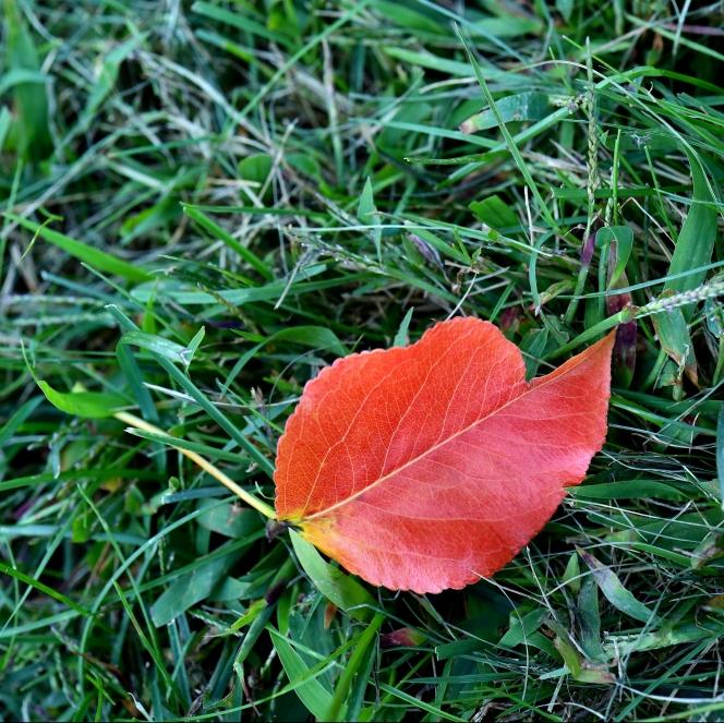 lined leaf