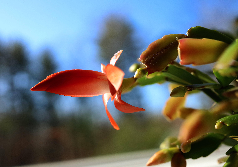 blossom day 1
