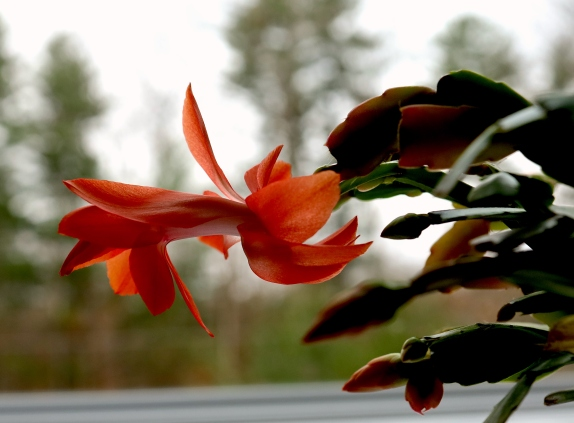 blossom day 2