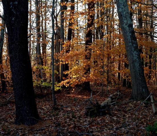 deep woods 2