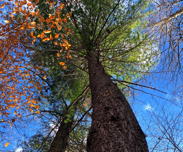 look up tree