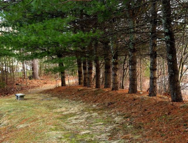 path&bench