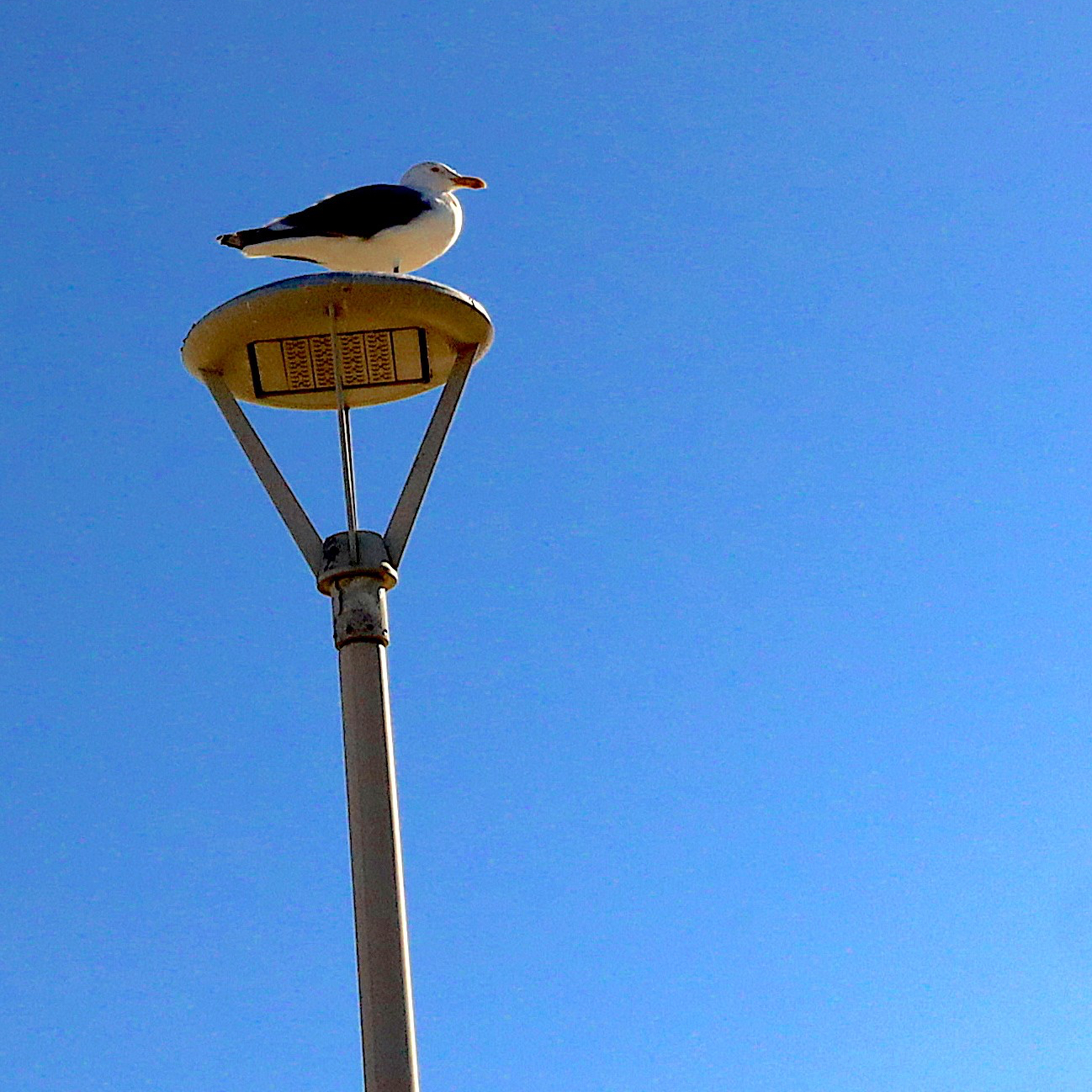 gull on top