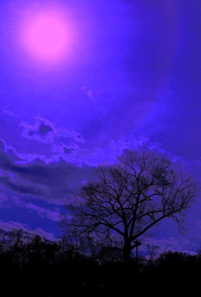 sun tree surreal