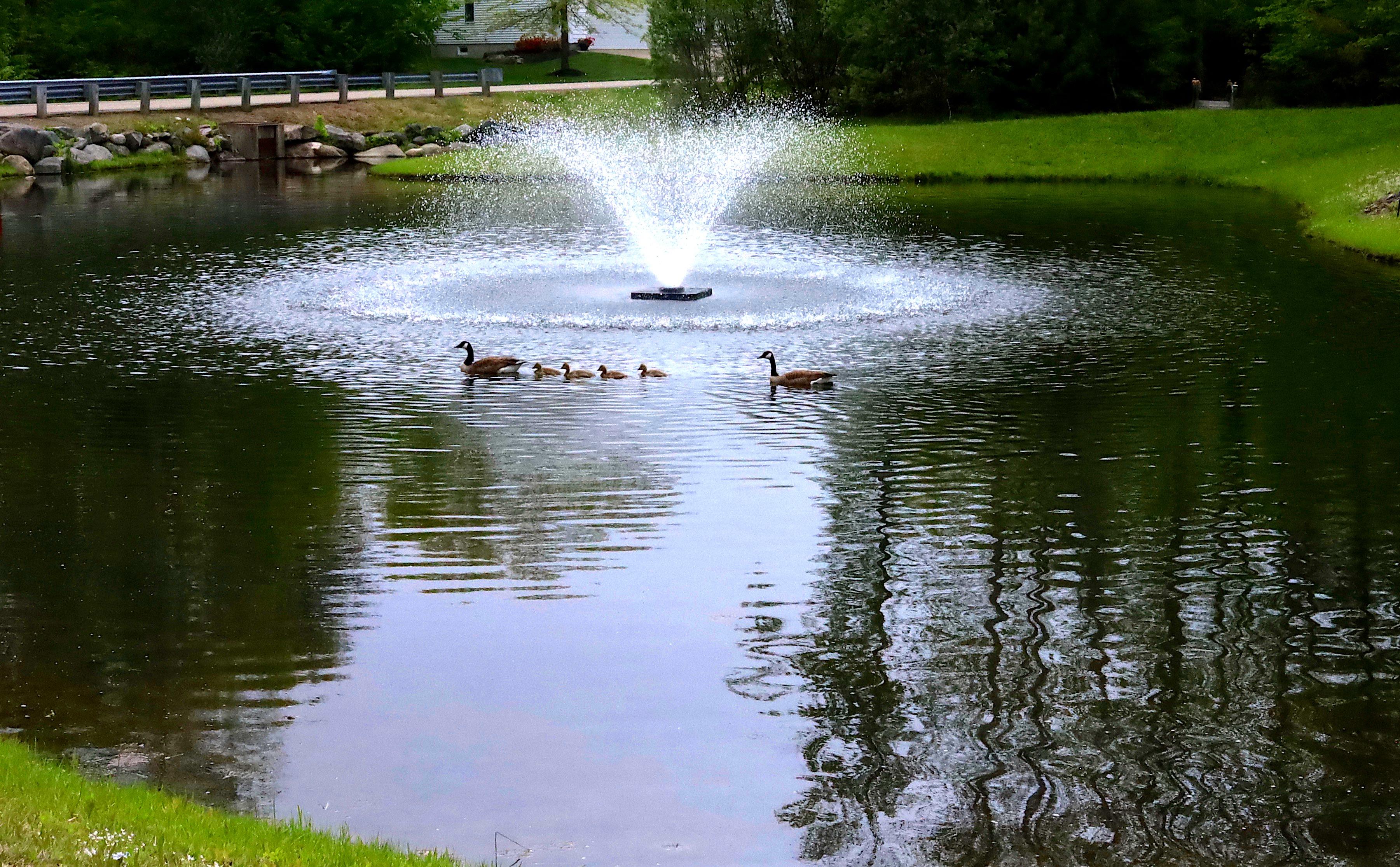 duck family final