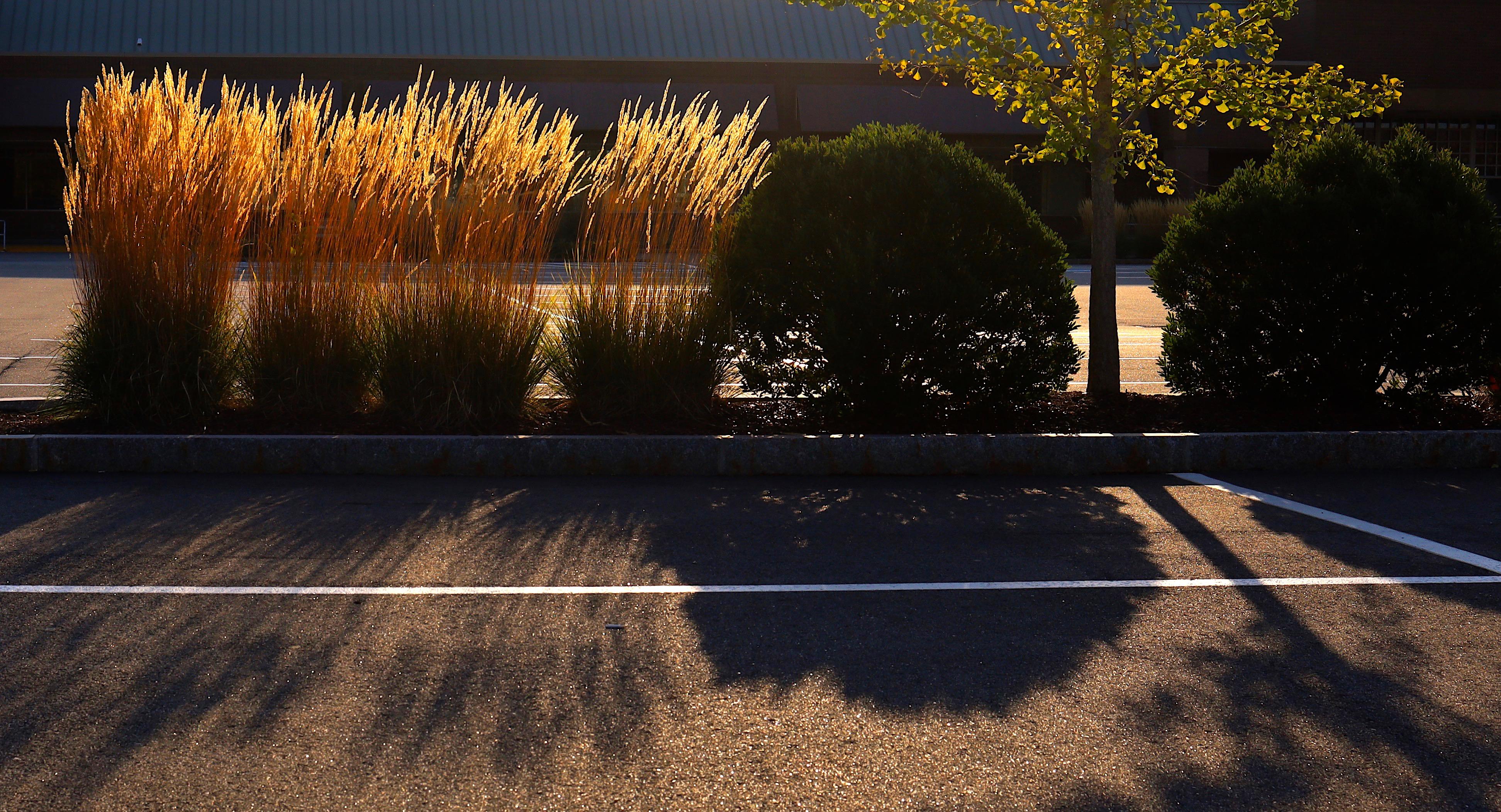 fall parking lot 2