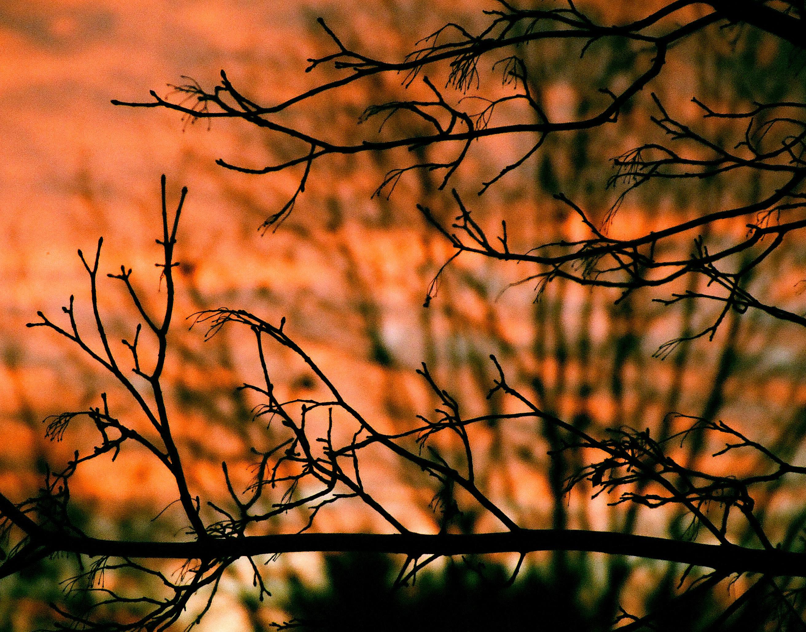 sunset69