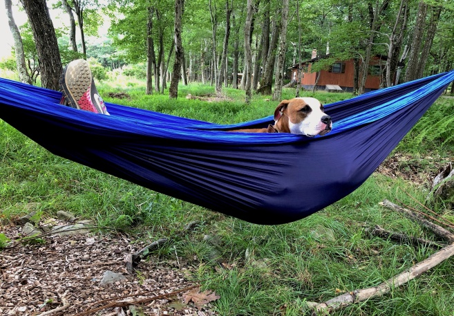 taco hammock