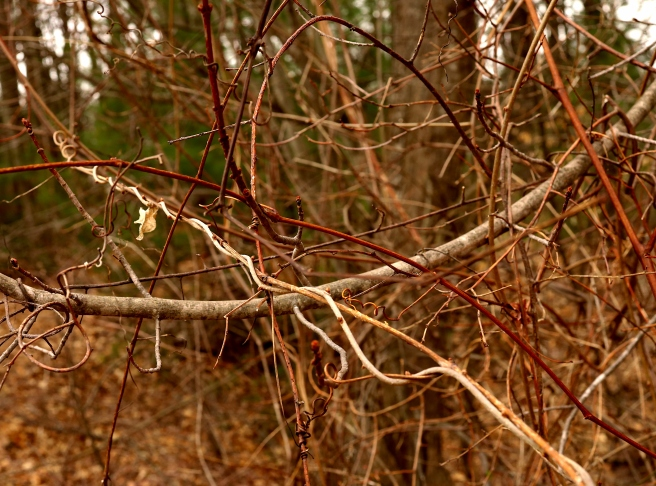 tangled crowded vines